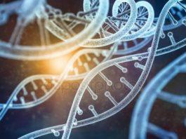 ADN de la empresa